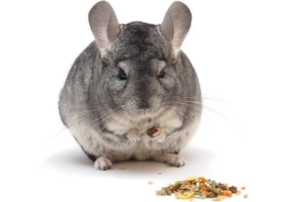 Good Pellet Food For Rabbits