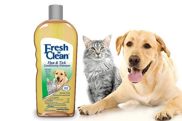 do cats smell more than dogs