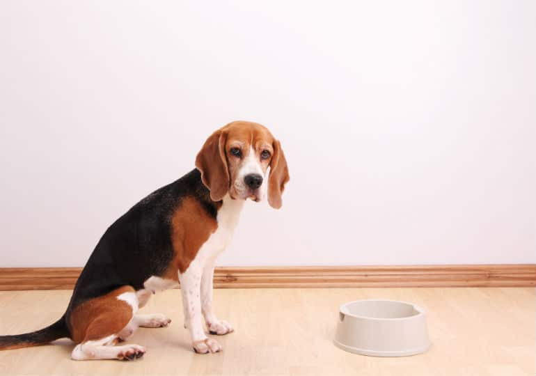 Can Dogs Eat Human Probiotics