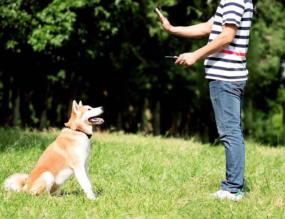 Best Dog Cooling Collar