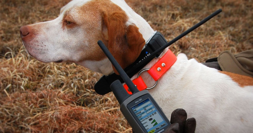 Top 11 Dog GPS trackers in 2018 | Reviews & Comparative ysis Important Factors To Be Considered When Buying The Dog Collar Gps on